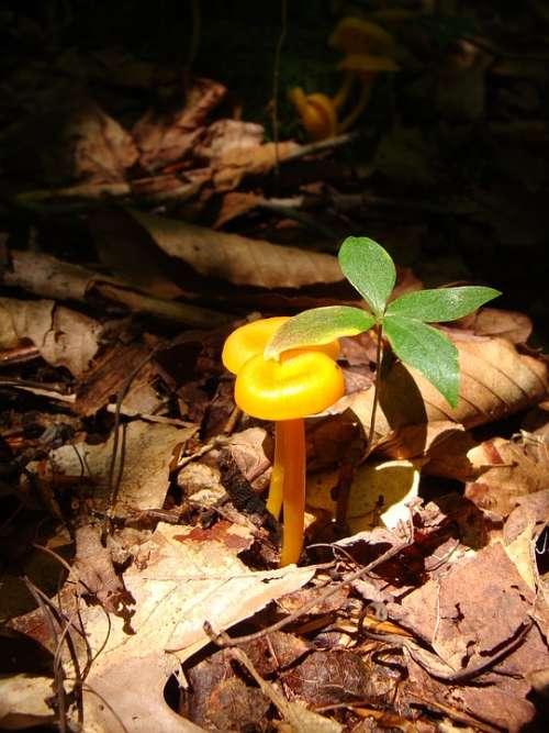 Toadstool Mushroom Forest Woods Pennsylvania
