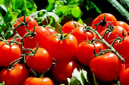 Tomatoes Red Food Fresh Market Vegetables