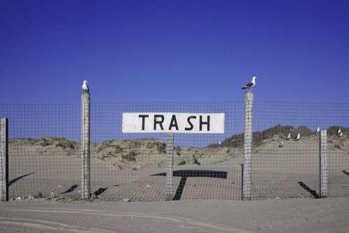 Trash Seagulls Sign Color Sunny Tourism Garbage