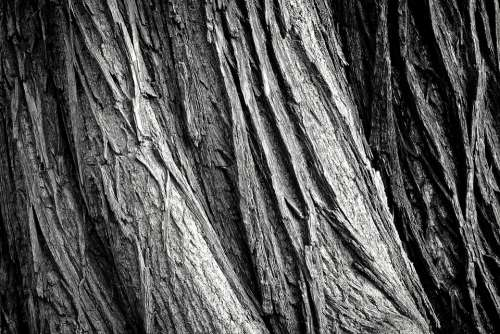Tree Tree Bark Log Nature Tribe Wood Bark Forest