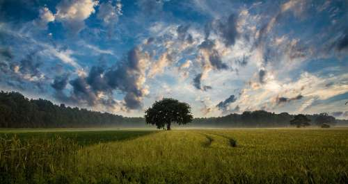 Tree Field Cornfield Nature Landscape Sky Clouds