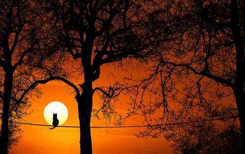 Tree Cat Silhouette Sunset Dawn Dusk Nature Sun