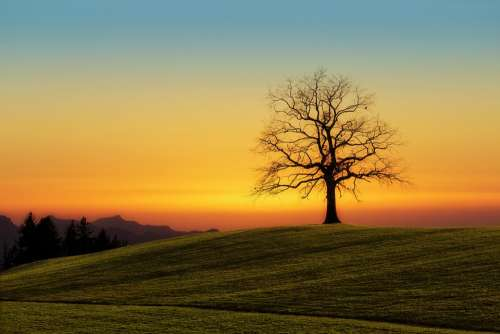 Tree Sunset Nature Dawn Landscape Sky Evening