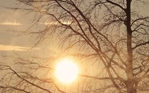 Tree Dawn Morning Sun Sunrise Fog Morning Mist