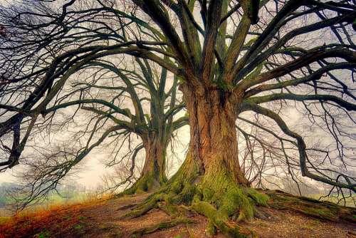 Tree Nature Wood Landscape Plant Kahl Log Tribe