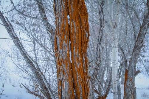 Tree Old Tree Nature Winter Cold Aesthetics