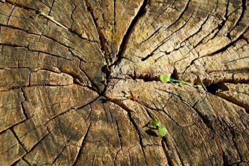 Tree Wood-Fibre Boards Wood Body Pattern Brown