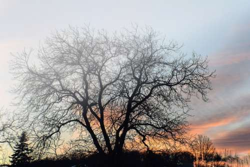 Tree The Sky Nature In The Evening Clouds Twilight