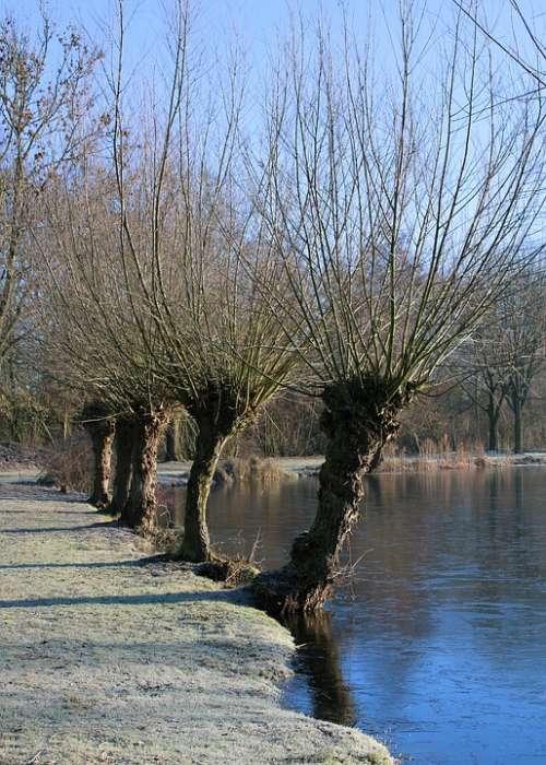 Tree Lake Bank Frost Winter Graze Row Of Trees