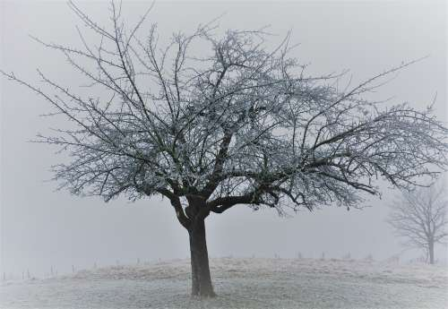 Tree Winter Landscape Cold Idyllic