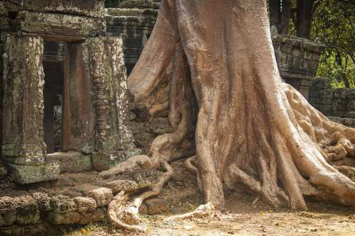 Tree Log Root Middle Ages Past Forget Time Khmer