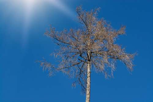 Tree Tree Top Crown Nature Of Course Sky Winter