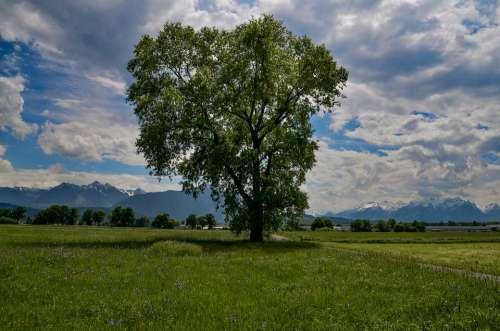 Tree Meadow Landscape Grass Field Sky Clouds