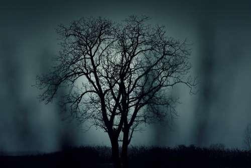 Tree Silhouette Mysterious Halloween Black Dark