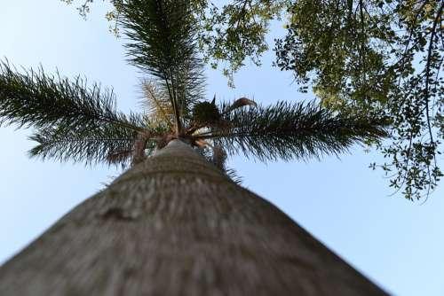 Tree Palm Nature Plant Exotic Paradise