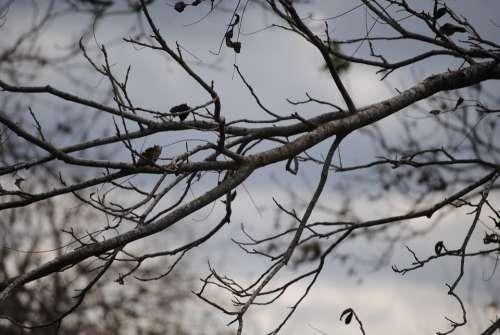 Tree Branch Nature Season Winter Wood Plant