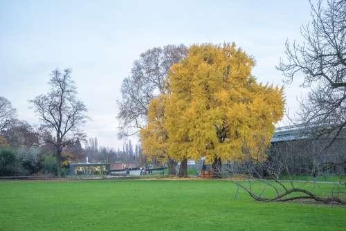 Tree Autumn Leaves Forest Golden Autumn Yellow