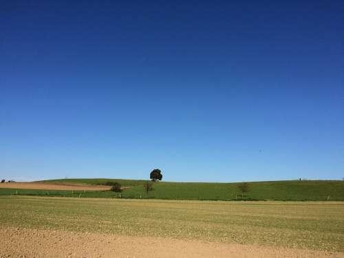 Tree Field Sky Blue
