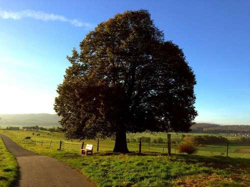 Tree Bank Autumn