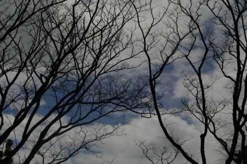 Tree Gloomy Mood Silhouette