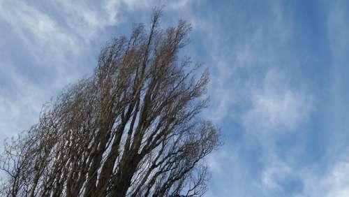 Tree Sky Blue Nature Crown Landscape Field Wind
