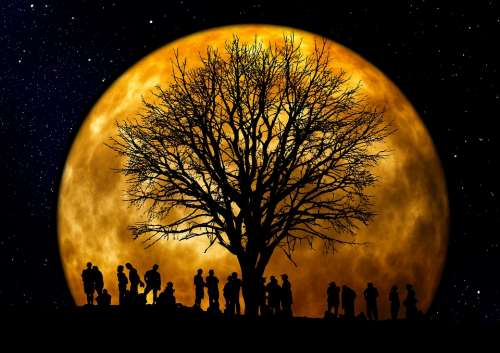 Tree Kahl Moon Human Group Silhouette Background