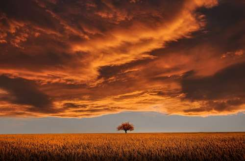 Tree Field Calm Tranquil Scene Beautiful Clouds