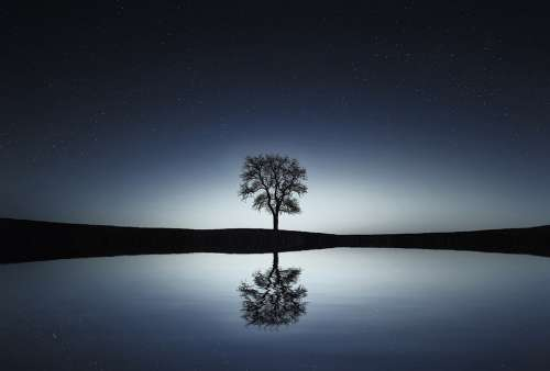 Tree Lake Reflection Water Calm Tranquil Scene