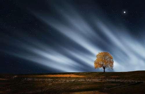 Tree Natur Nightsky Meadow Landscape Outdoors