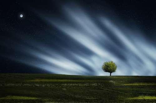 Tree Natur Nightsky Meadow Grass Landscape