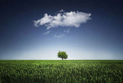 Tree Natur Nightsky Cloud Meadow Grass Landscape