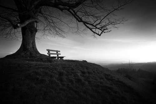 Tree Bench Solitude Landscape Black And White