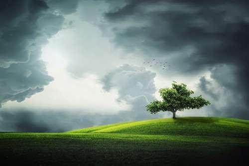 Tree Summer Beautiful Park Green Grass Clouds
