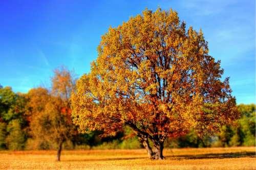 Tree Fall Fall Colors Fall Leaves Autumn