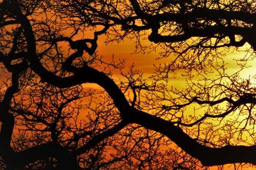 Trees Tree Aesthetic Sunset Branch Tribe Crown