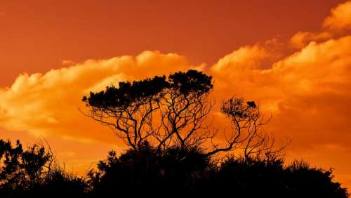 Trees Branches Sunset Sky Clouds Nature