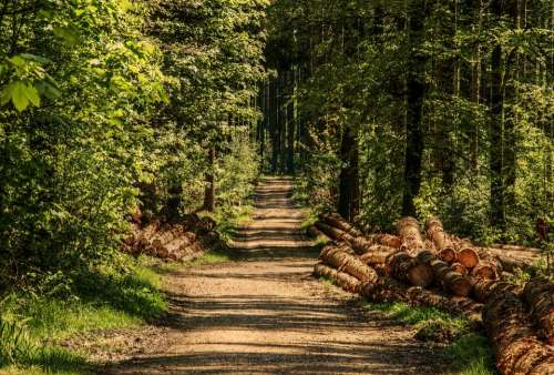 Trees Forest Forest Path Sunlight Wood Summer