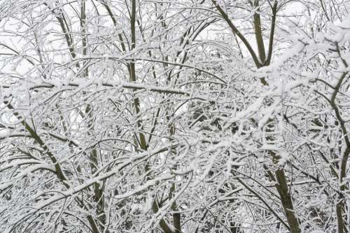 Trees Snow Winter Cold Nature Wintry White