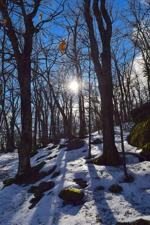 Trees Snow Winter Sun Sunlight Cold Nature