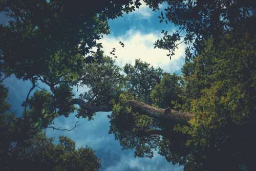 Trees Clouds Sky Birds Nature Outdoors