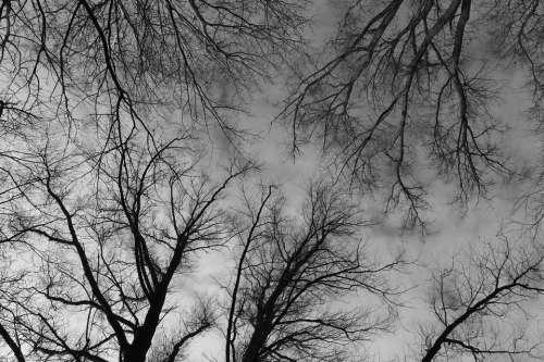 Trees Treetops Branches Black White Mysterious