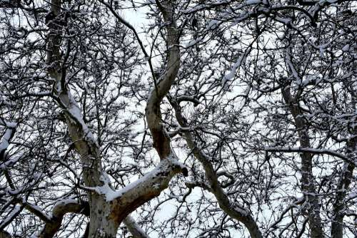 Trees Branches Branch Nature Forest Winter Tree