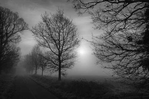Trees Misty Fog Scary Foggy Landscape Mystery