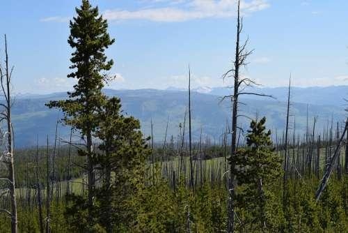 Trees Landscape Forest Nature Scenic South Dakota