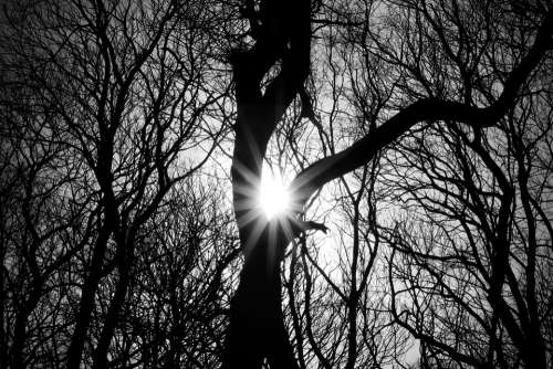 Trees Silhouette Woodland Wood Tree Sun B W