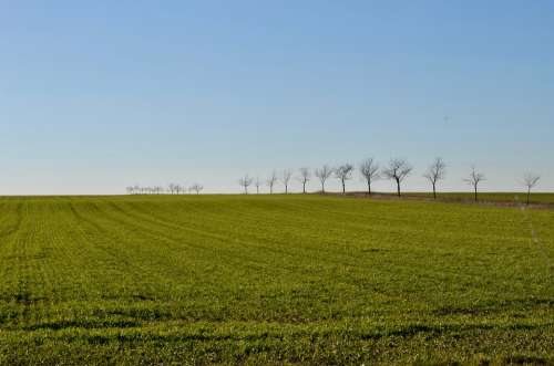 Trees Arable Field Landscape Agriculture Rural