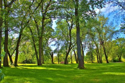 Trees Grass Nature Landscape Meadow Environment