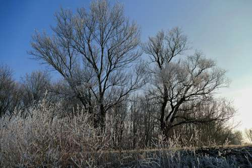 Trees Sky Nature Winter Country Frost