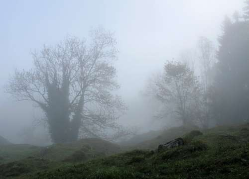 Trees Mystical Fog Autumn Foggy Gespenstig