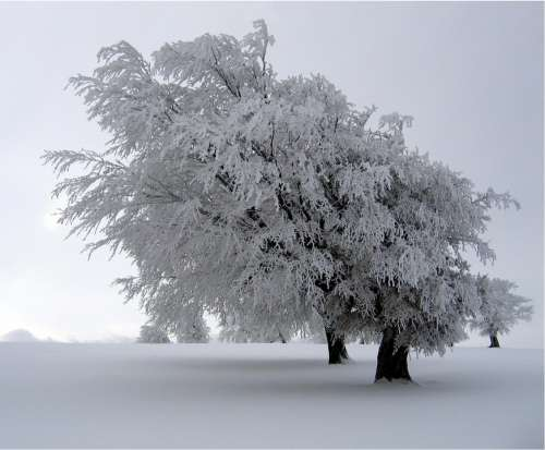 Trees Snow Covered Landscape Winter Cold Season